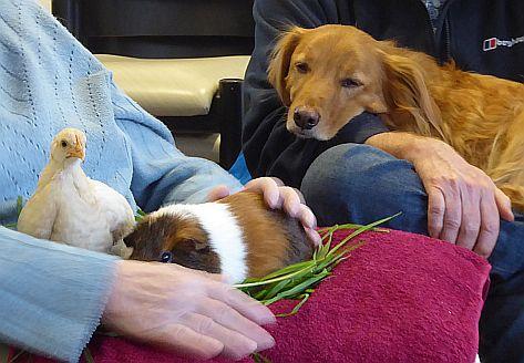tiergestützte Therapie mit Hund, Huhn und Meerschweinchen