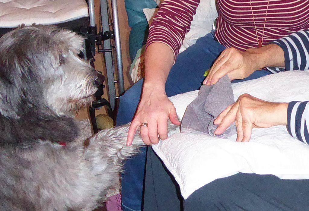 Tiergestützte Therapie mit Hund