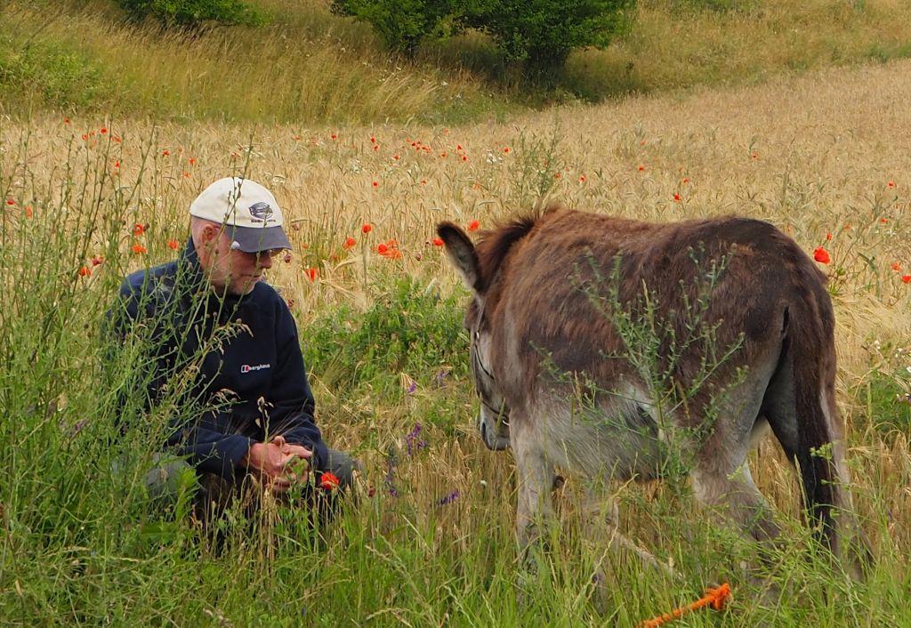 Mensch-Tier Kommunikation, Michael mit Esel