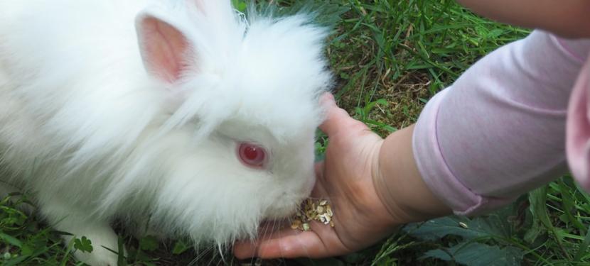 Wieso Tiere im therapeutischen und pädagogischen Einsatz wirken